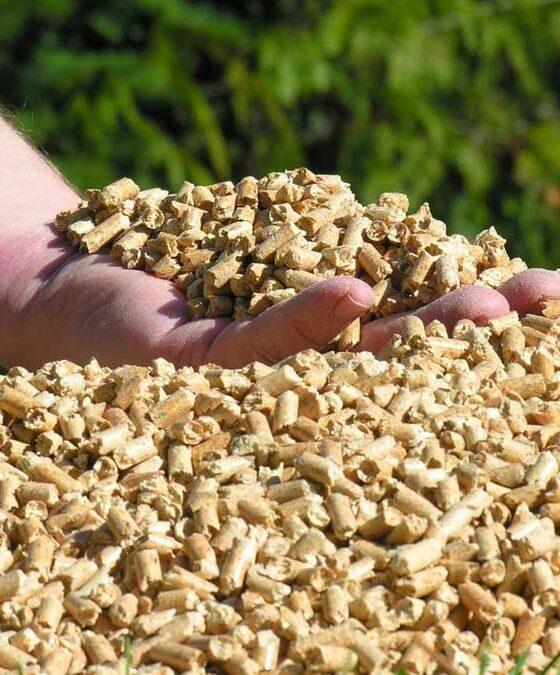 El ahorro, la principal razón para pasarse a la biomasa - Moneleg